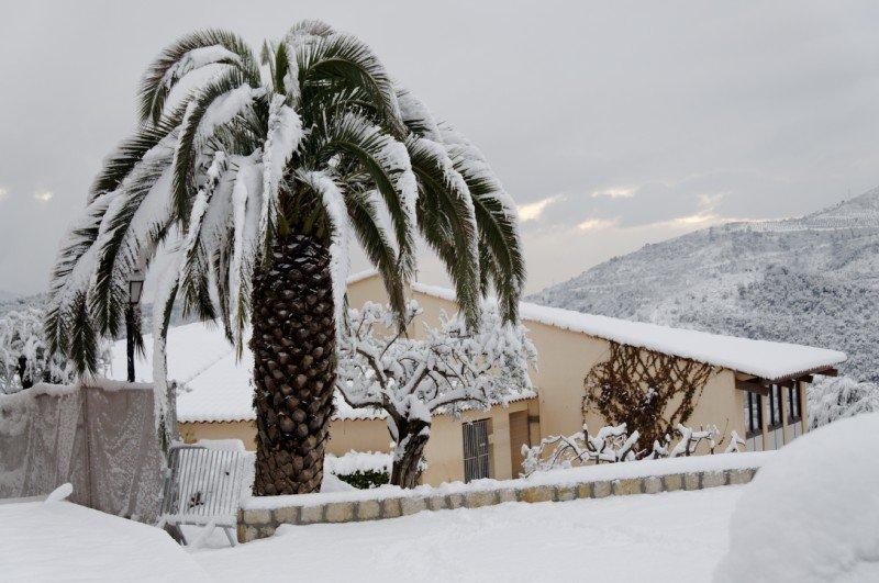 palmierduvoisin.jpg