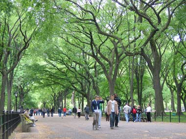americanelmtrees.jpg